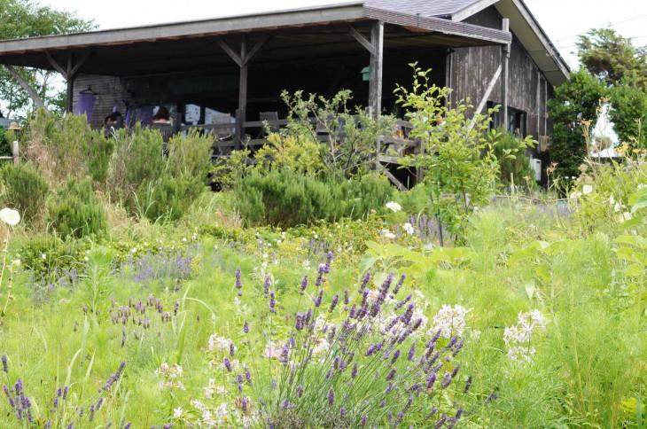 Herb Land Season_House_557KB