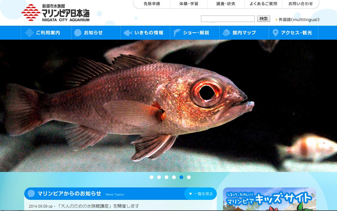世界初のアカムツ(のどくろ)人工育成。マリンピア日本海で幼魚公開
