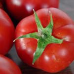 曽我農園さんのトマトを一番美味しい時期にいただく!