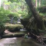 【週刊にいがたレポ】8/10(日)~8/16(土)