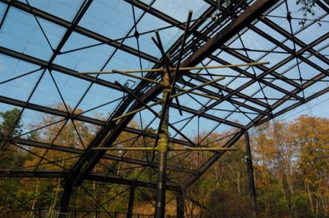 止まり木と天井のネットにご注目