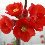 名前はボケ。見てびっくり可愛いお花!