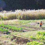 子どもが土に触れられる日常が嬉しい