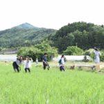 初夏には多くのホタルが舞う、西蒲区福井集落をまちあるき【ZINEづくりレポート】